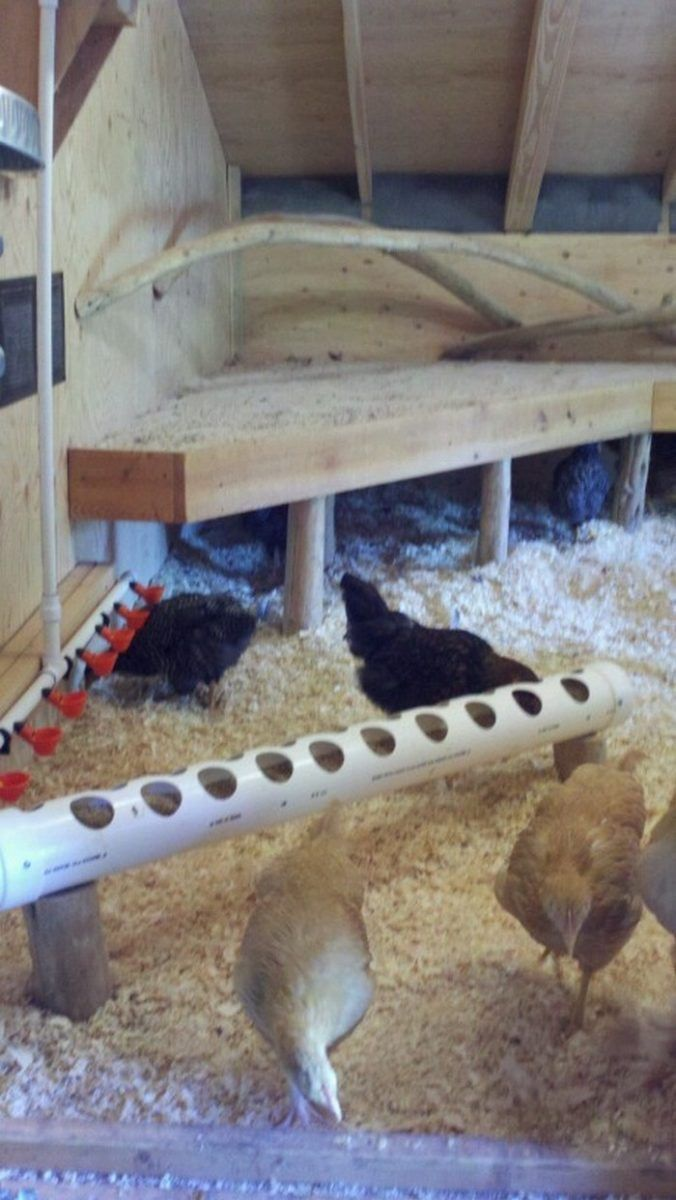 Chicken Roost With Poop Board For Easy Clean Up Diy Projects For Everyone Chickens