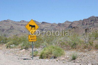 Donkeys ahead