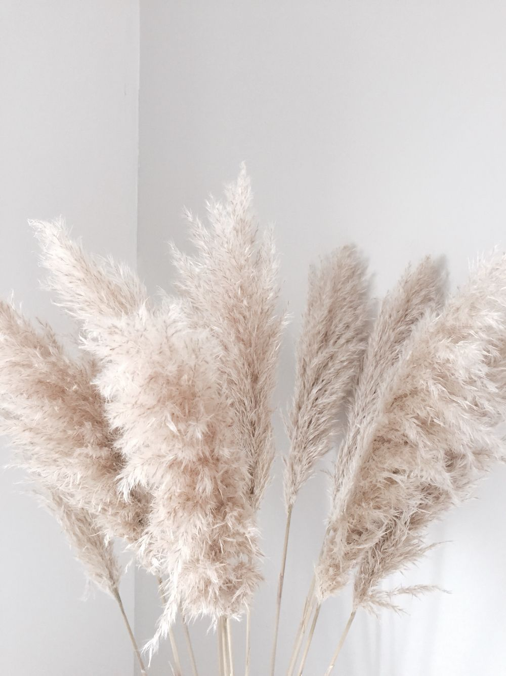 Weddings With Pampas Grass Curious Country Creations Crafty Life Wedding Flower Trends Dried Flowers Pampas Grass
