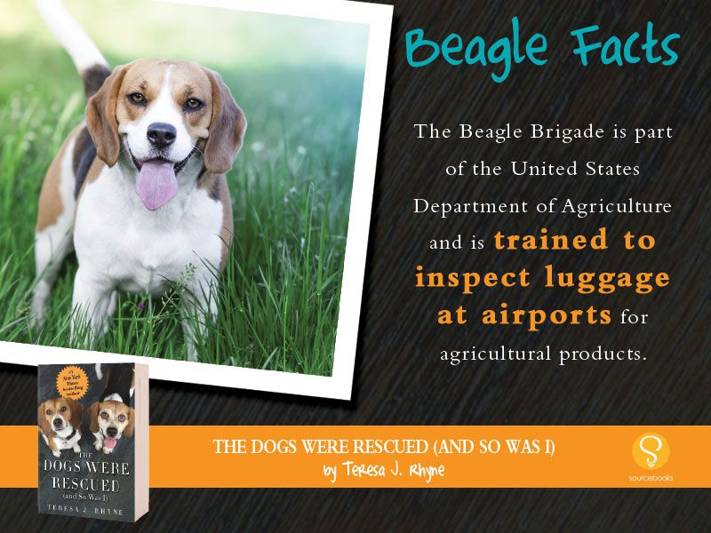 The Beagle Brigade Beaglefacts A Portion Of The Proceeds From The