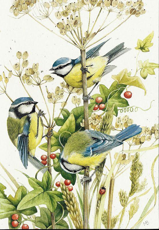 M sanges bleues de marjolaine bastin images cage oiseaux - Bastin de bois ...