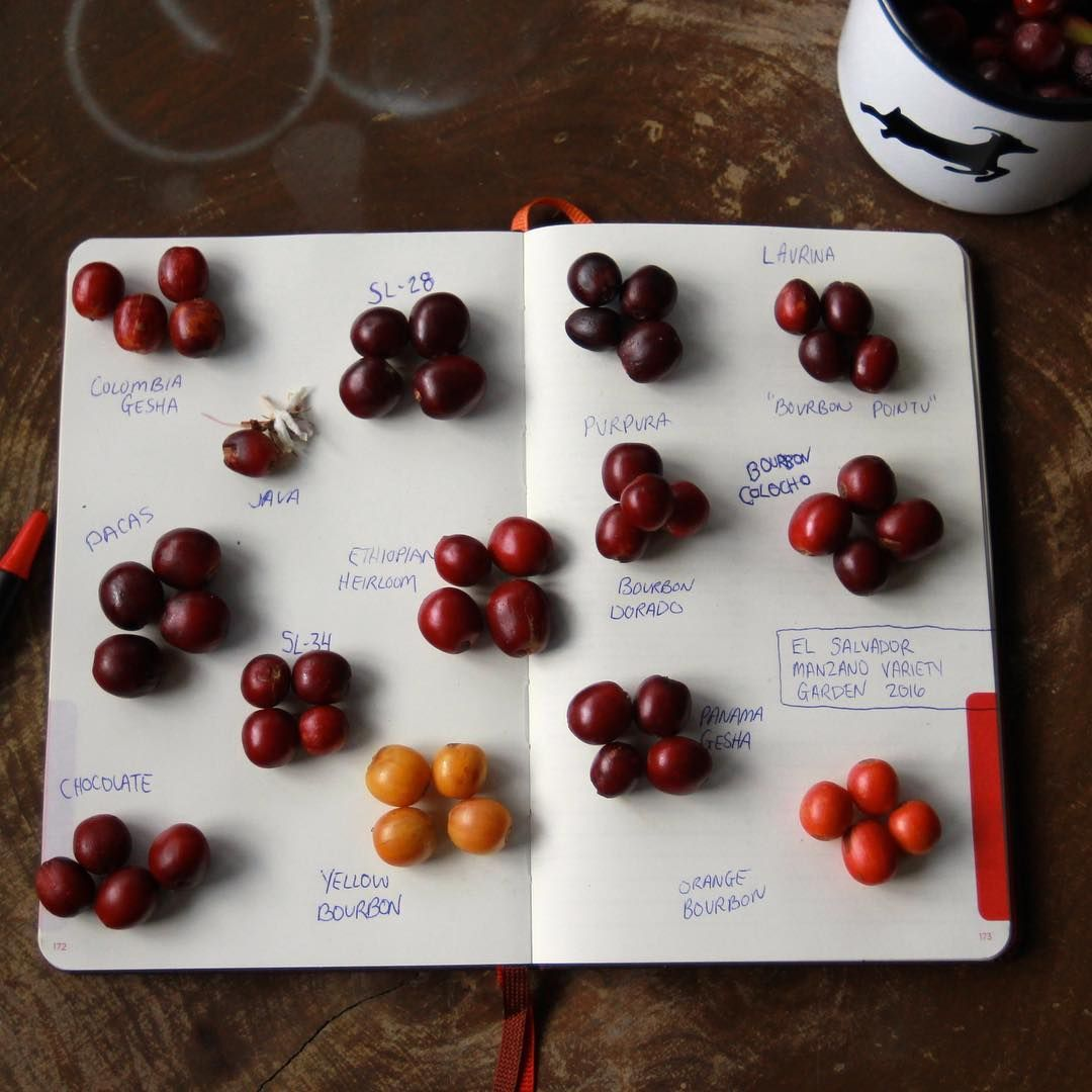 Pin by Wilma Wiid on BREWING Coffee varieties, Coffee