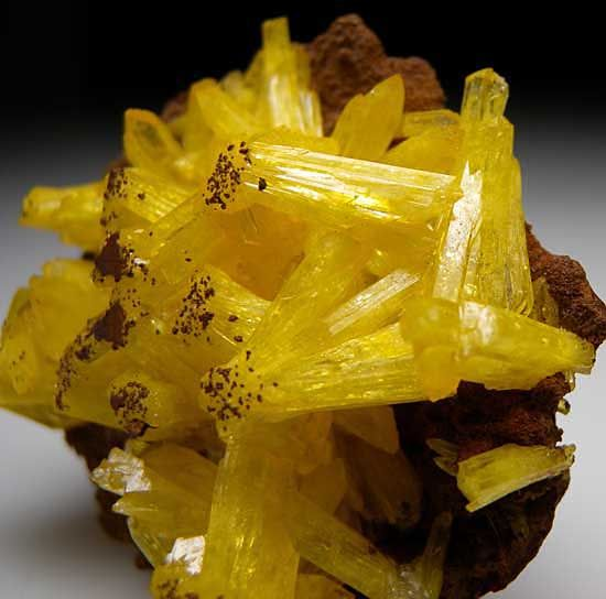 Cluster of Legrandite crystals covering a thin limonite plate. The color of these crystals is superb with a bright lemon yellow as compared to many which are a darker golden color.