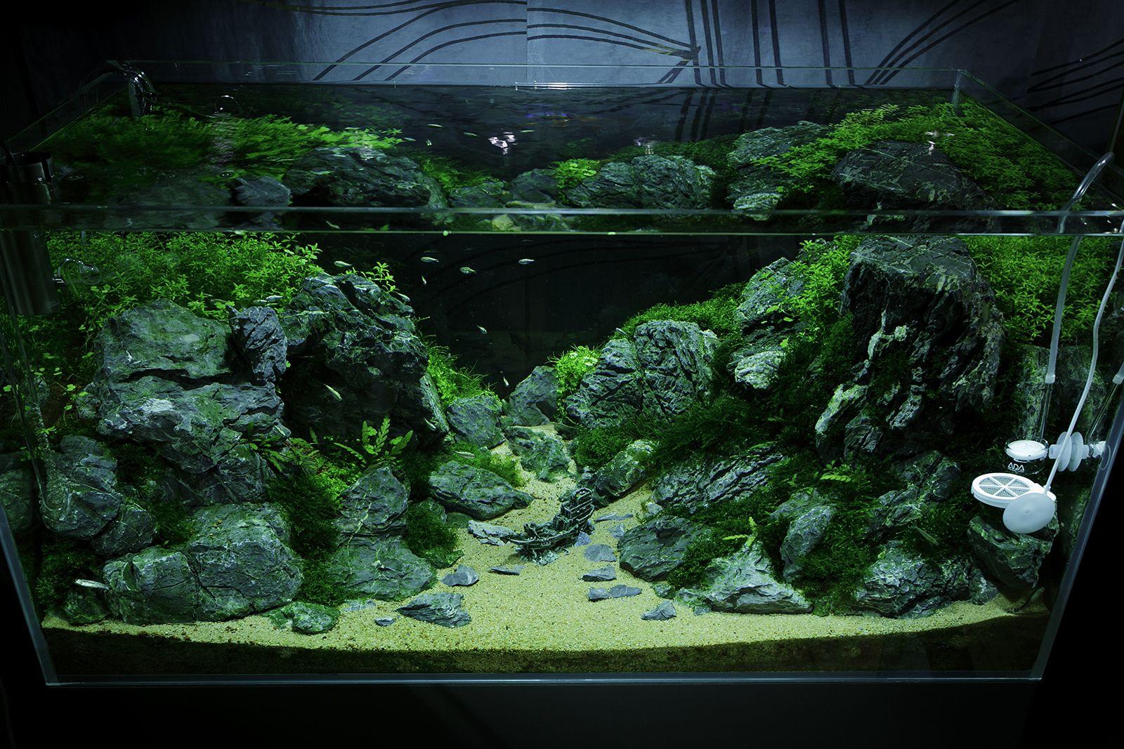 Green Aqua Showroom   Planted aquarium, Nature aquarium ...