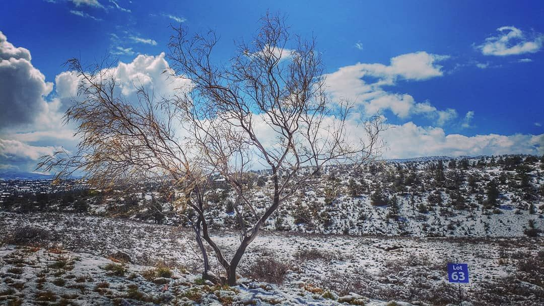 Walking in our mildly winter wonderland-- 1 an empty tree and empty lot 2 Granit...