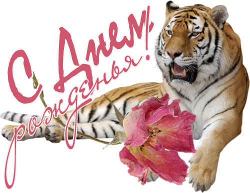 Открытка на день рождения тигр