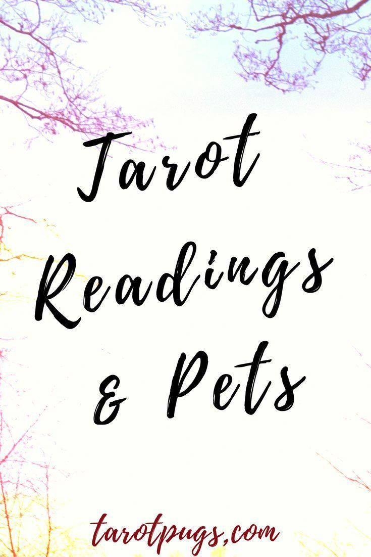 Learn how to do tarot readings for your pet tarot