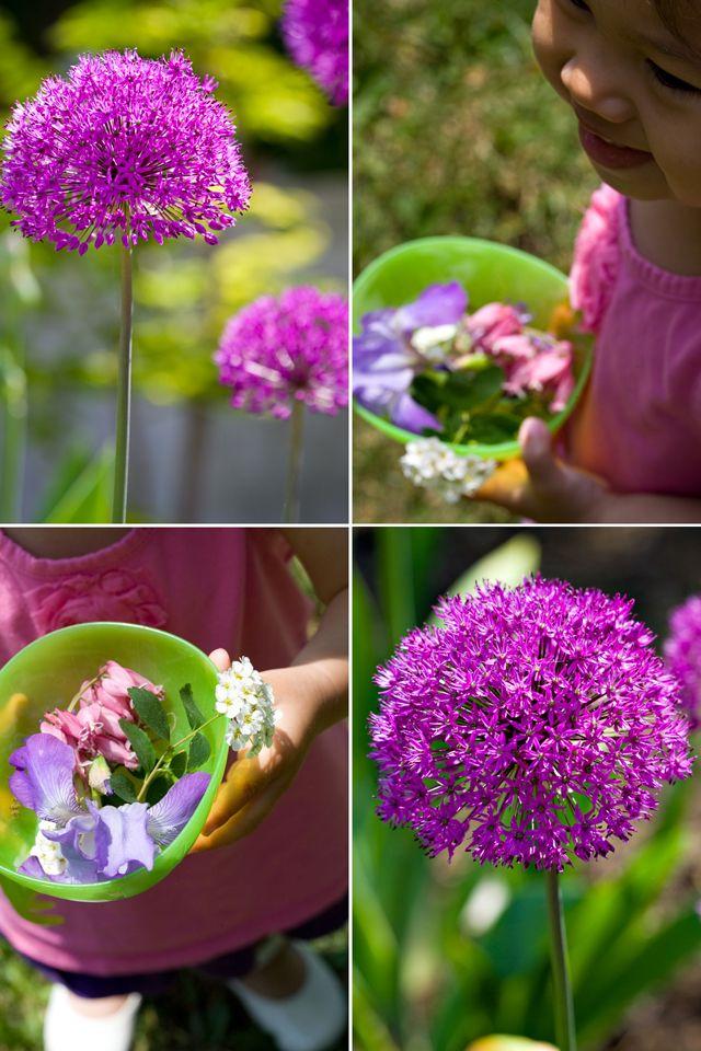 T Pompom Flowers Wp Bulb Flowers Pom Pom Flowers Chinese Sausage
