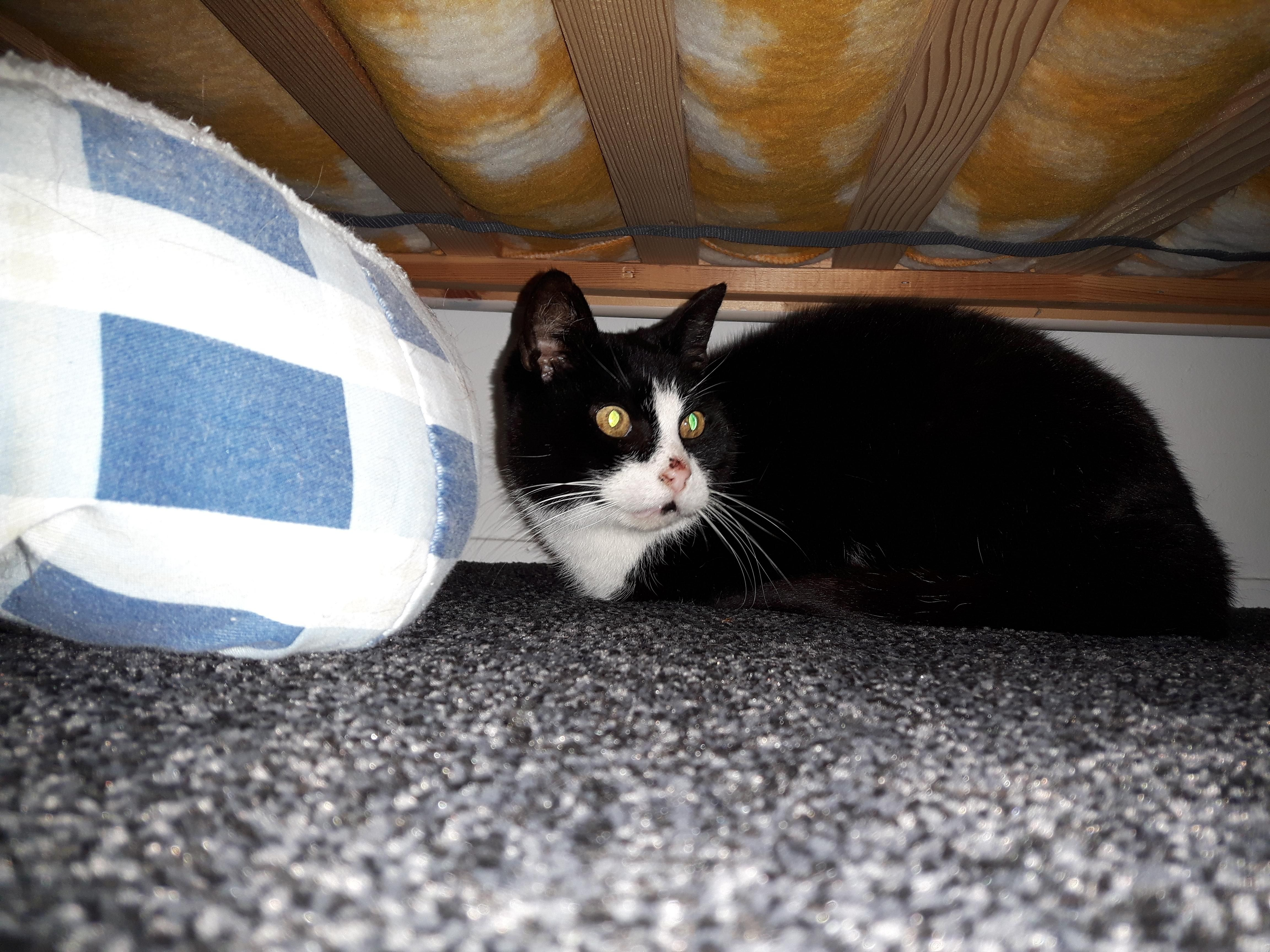 My cat hiding under my bed stirred by a fireworks