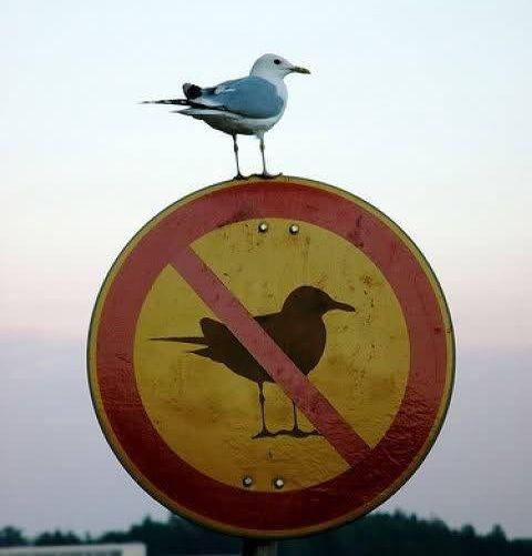 #verboten!