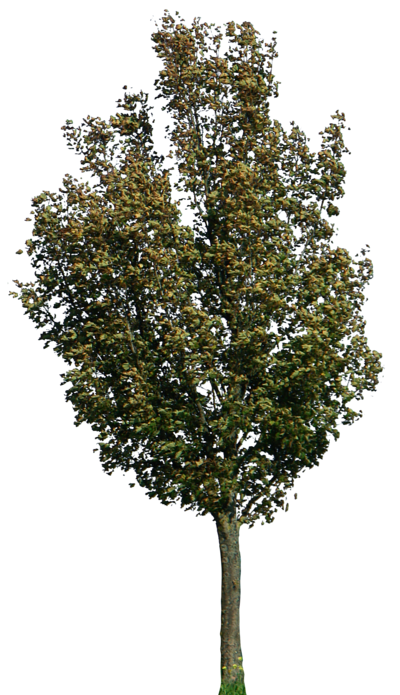 Tree 40 Png By Gd08 On Deviantart Tree Photoshop Garden Illustration Tree