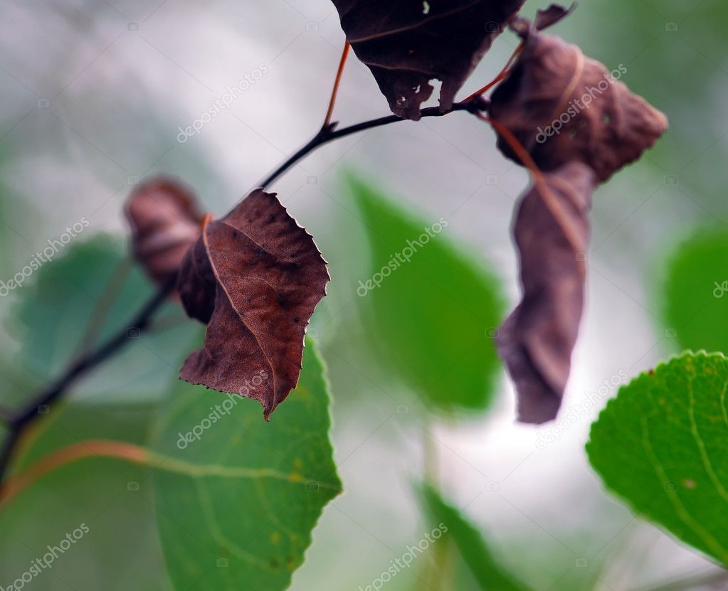 Dead leaves - Stock Photo , #AFFILIATE, #leaves, #Dead, #Photo, #Stock #AD