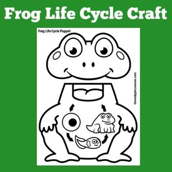 Frog Life Cycle Craft Frog Life Cycle Activity Frogs