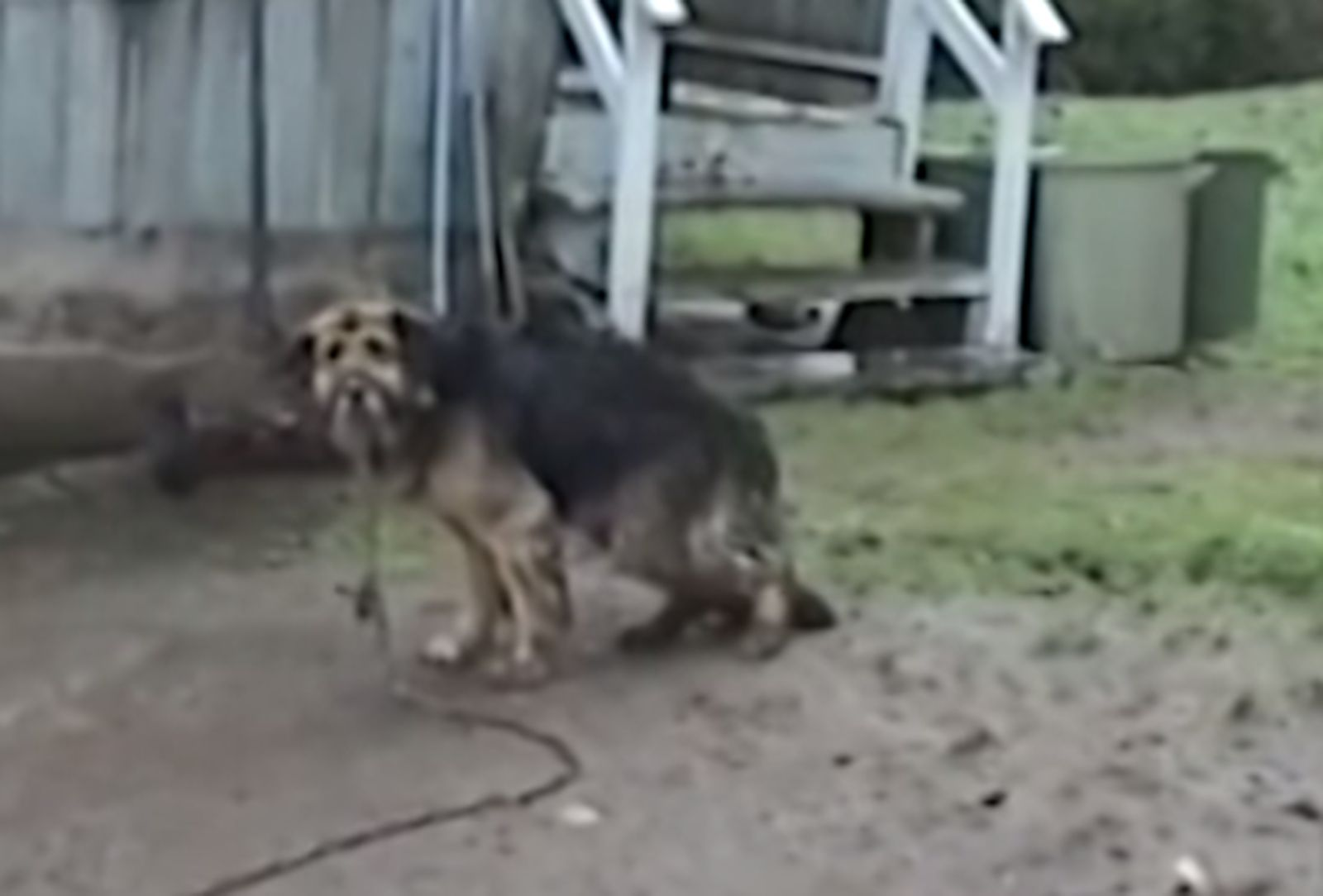 Dog Chained for 10 Years Finally Gets Rescued (VIDEO) // this hurts my heart more than I will ever be able to say. I will never understand why people have pets and then keep them outside. They urinated on her! Tears for Judith. Some happy. Mostly sad for the 10 years of cold, hungry hurt she endured. If you see this ever - do something. Step up. Save the animal from this.