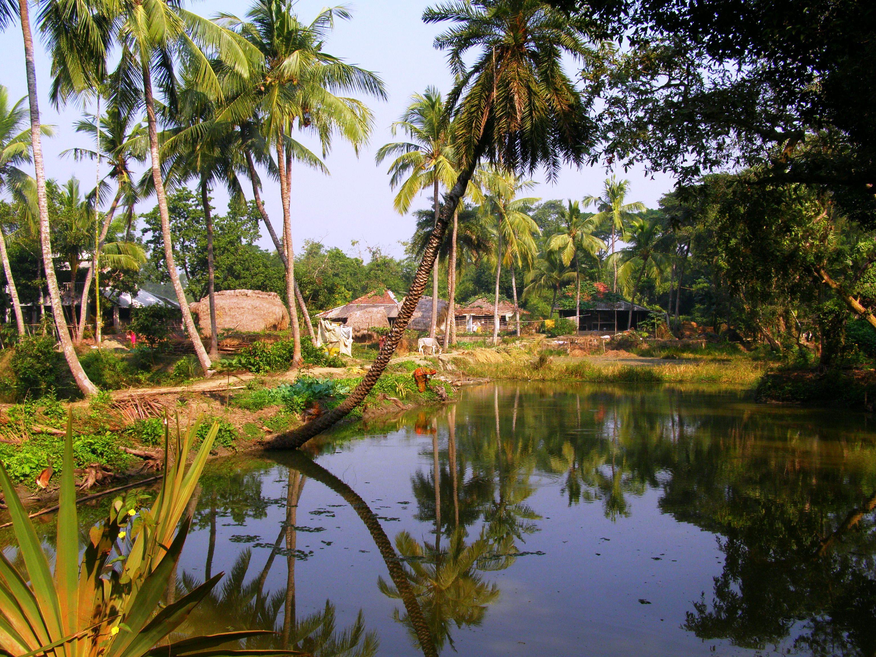 Bengal Village Landscape Photography Nature Landscape Photos Village Photography