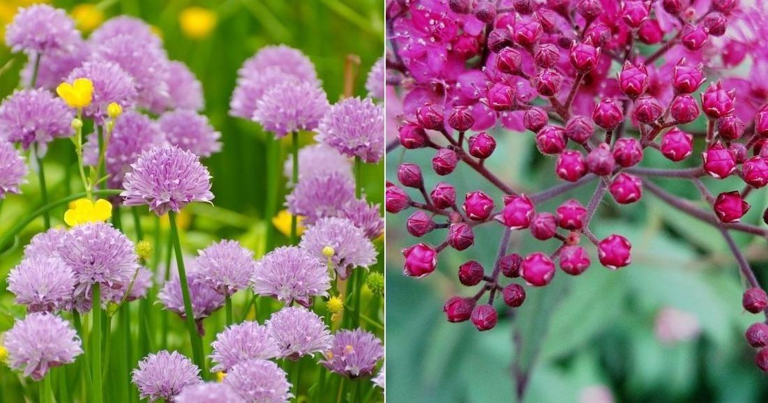 Descubre qué le está pasando a tus plantas antes de que mueran
