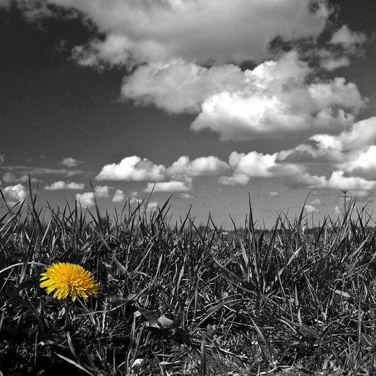 Black and white photography nature assortment of black and white photography with colour splashcolor popcolor