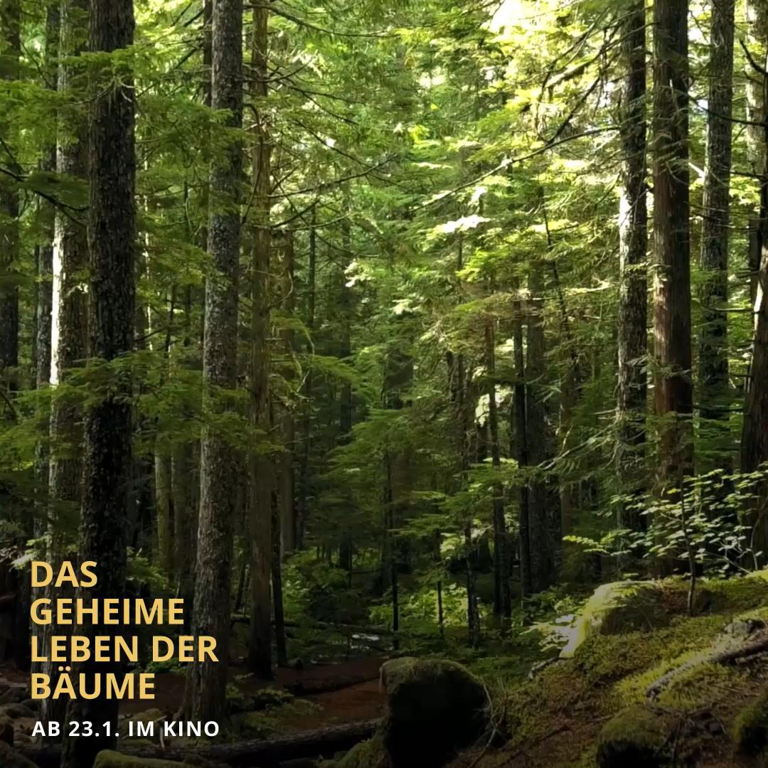 Pin Von Constantin Film Auf Das Geheime Leben Der Baume Video In 2020 Baum Geheim Constantin Film