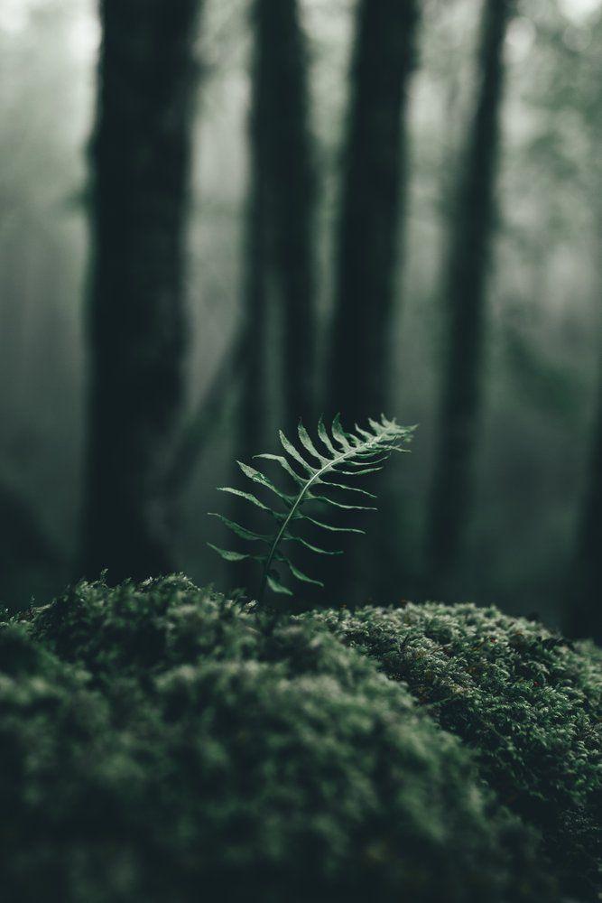 Little Things In 2020 Dark Green Aesthetic Nature Aesthetic Forest Wallpaper