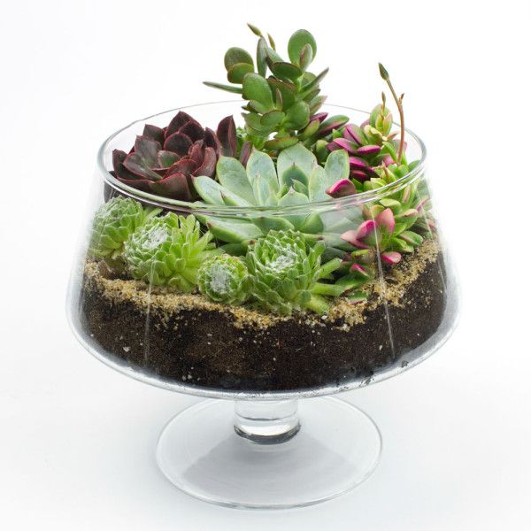 The Brandy Snifter Diy Succulent Terrarium Kit To Try In