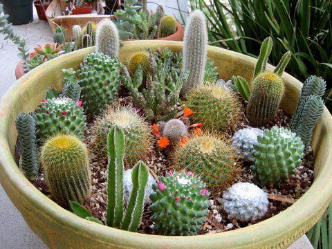 The 25+ best Indoor cactus garden ideas on Pinterest ...