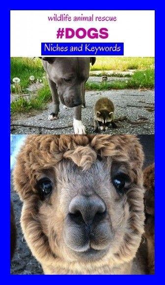 Wildlife animal rescue #dogs #niches #seo #keywords ...