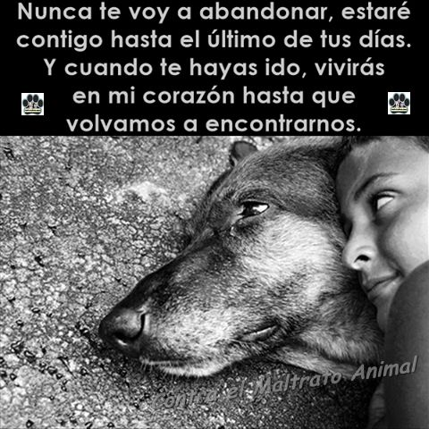 Animalista Perros Frases Animales Frases Mascotas Frases