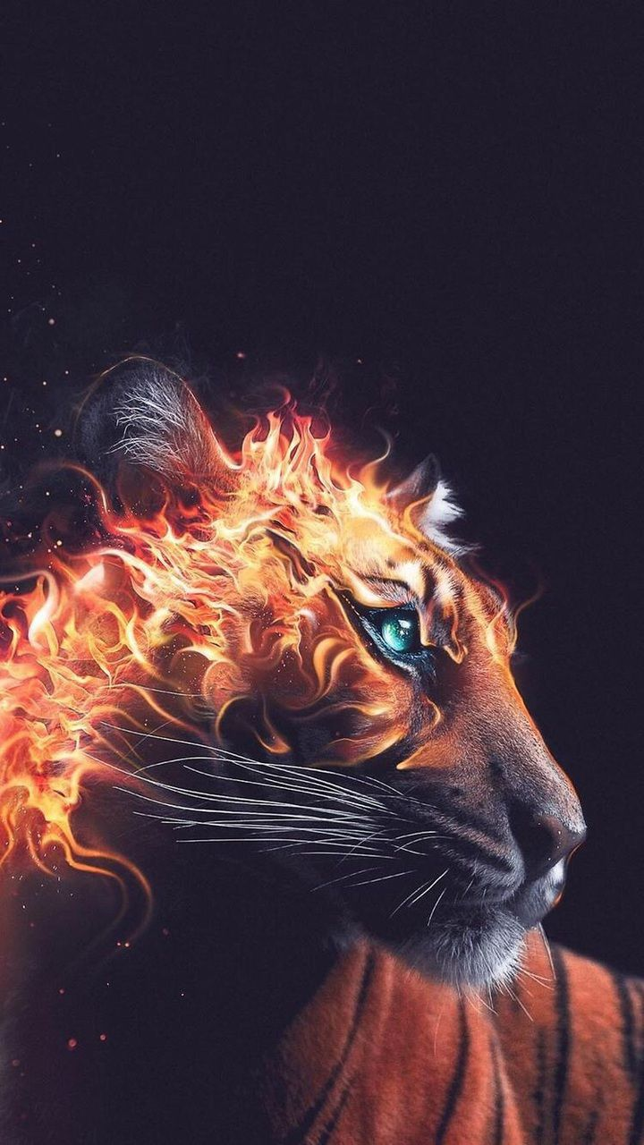 Discover And Share The Most Beautiful Images From Around The World Tiger Wallpaper Fire Art Tiger Artwork