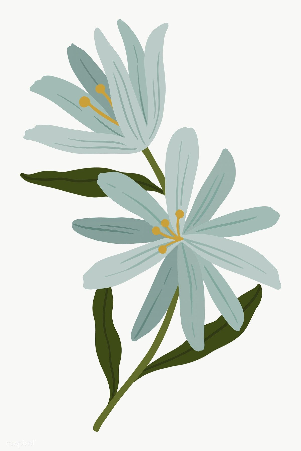 Blooming Blue Botanical Transparent Png Free Image By Rawpixel Com Noon Plant Illustration Flower Illustration Botanical Drawings