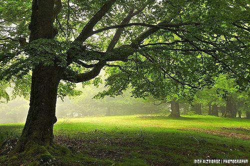 Zuhaitz onera hurbiltzen denak... / Quien a buen árbol se arrima...