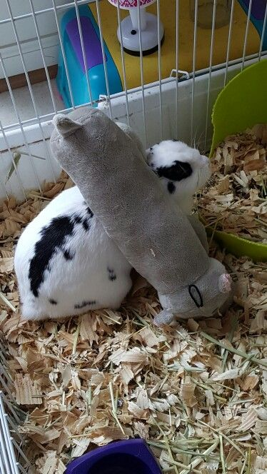 My silly bunny with her hippo friend.