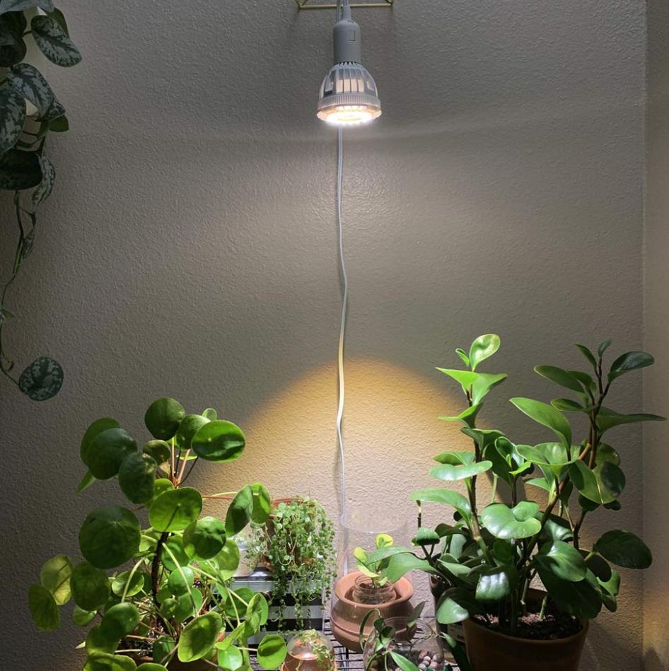 Best Grow Lights Reviewed By Succulent Lovers Grow Lights For Plants Indoor Grow Lights Grow Light Bulbs