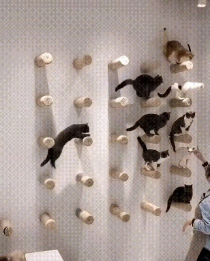 100 Cat Wall Ideas In 2020 Cat Wall Cat Room Paid Link You Can Find Out More Details At The Link Of The Image Cat Room Cat Furniture Cat Diy