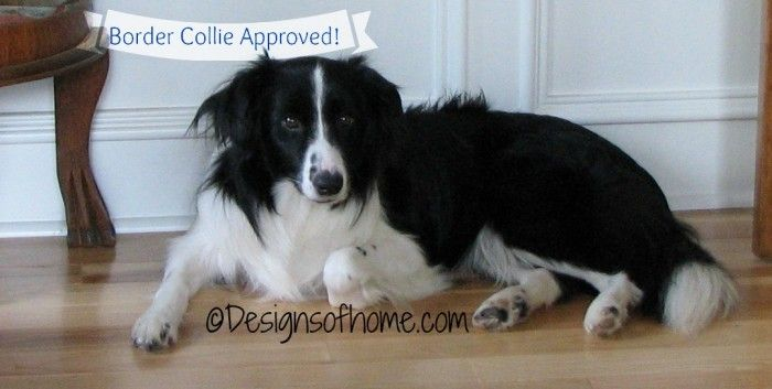 Border Collie Approved Border Collie Collie Pets