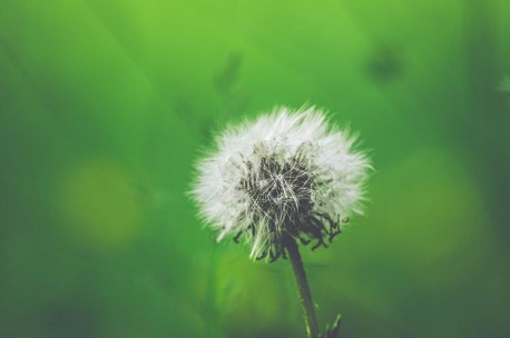 3 Ways To Manage Your Allergies In 2020 Close Up Photography White Dandelion Allergies