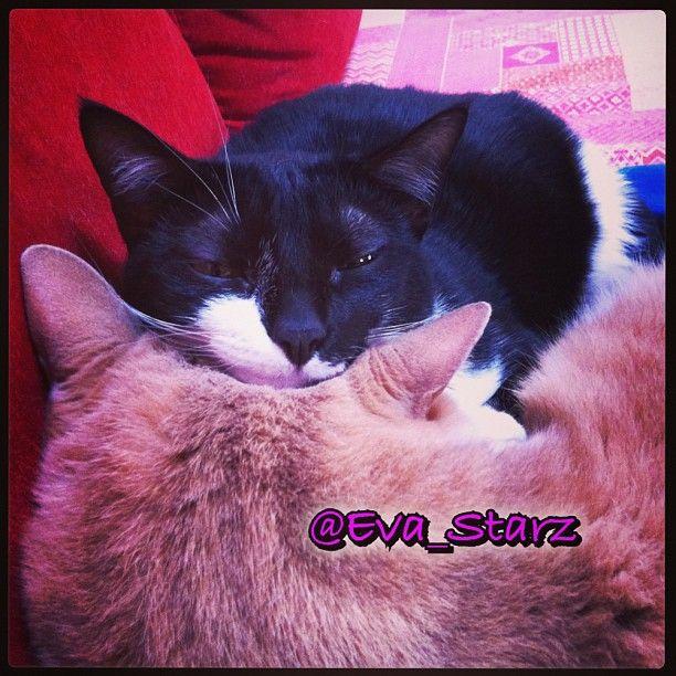 La comodità.. #cat #pet #animals #cute #love #sweet #catsagram #catstagram #instagood #kitten #kitty #kittens #pet #pets #animal #animals #petstagram #petsagram #photooftheday #catsofinstagram #ilovemycat #instagramcats #nature #catoftheday #lovecats #furry #lovekittens #adorable #catlover #instacat