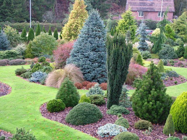 Foxhollowgarden Conifers Garden Evergreen Garden Front 400 x 300