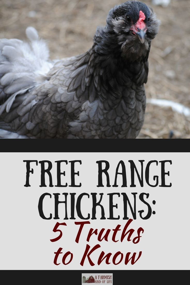 Free Range Chickens: 5 Truths To Know | Chickens backyard ...