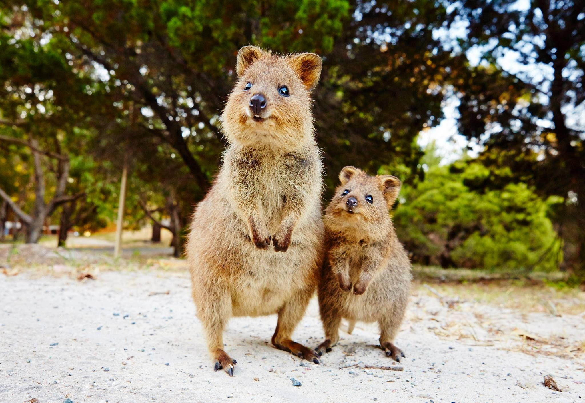 Not everything in Australia wants to kill you Cute