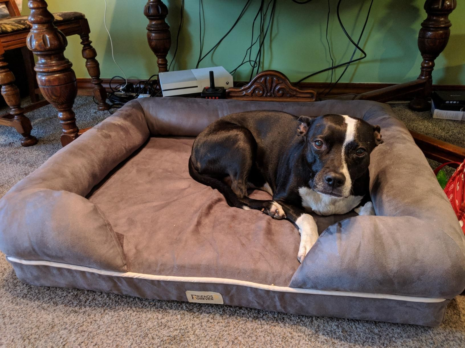 Huge Clearance Is Perfect For A Couple Smaller Pets Who Like It Cozy Or 1 Medium Dog Or 1 Large Dog Breed Up To 75lbs G Cool Dog Beds Large Dog