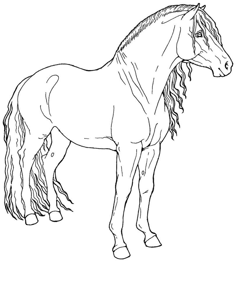 More Free Lines For Ya Xd Exclusively For Harpg Foundies Could Be Used As A Paso Fino Peruvian Paso Span Horse Coloring Pages Horse Painting Horses [ 987 x 810 Pixel ]