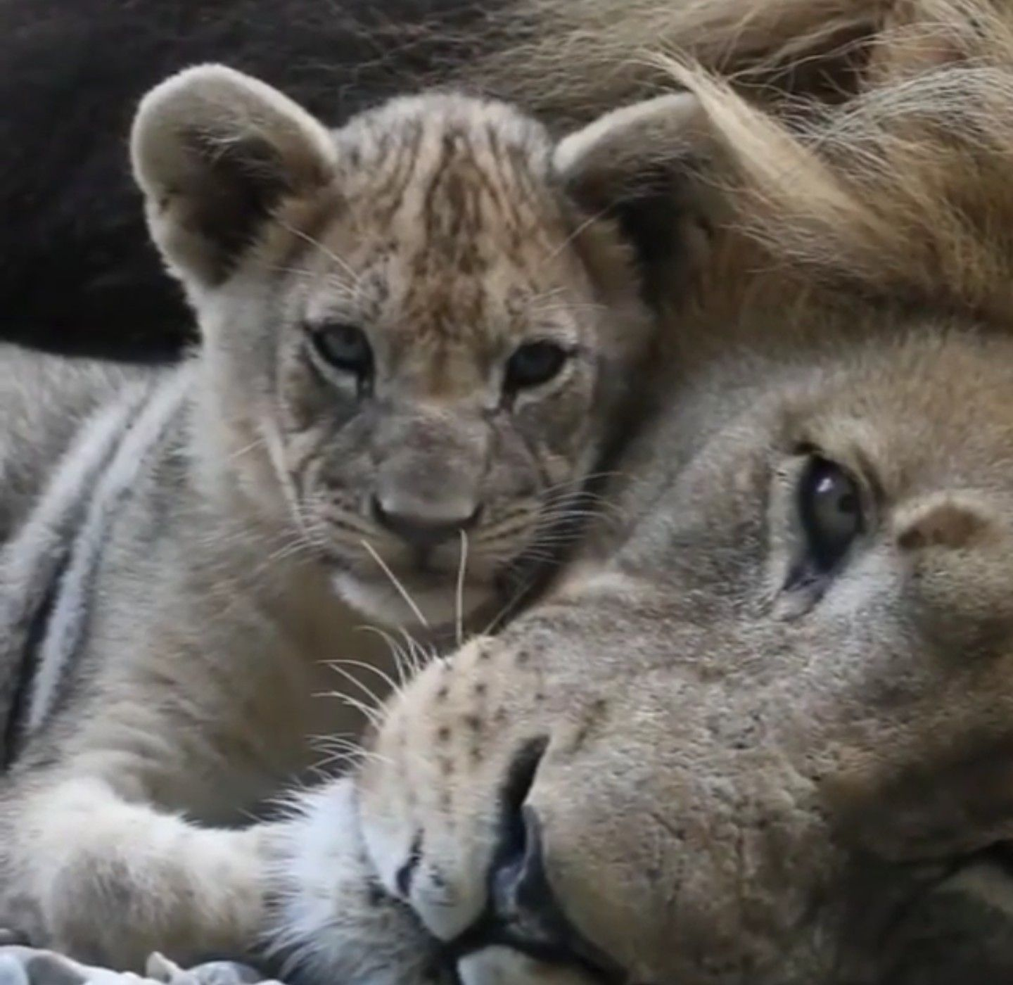 Pin By Terri Walters On Leo Small Wild Cats Animals Beautiful Animals Wild