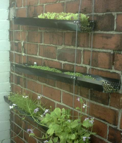 Vertical hydro veg patch (using rain gutters)