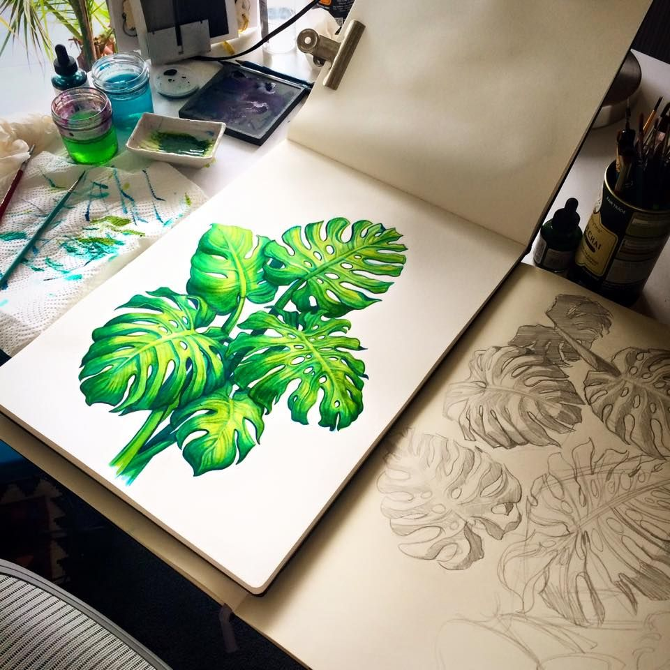 monstera deliciosa sanjana baijnath illustration