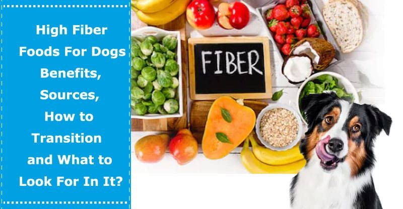 High fiber foods for dogs benefits sources how to