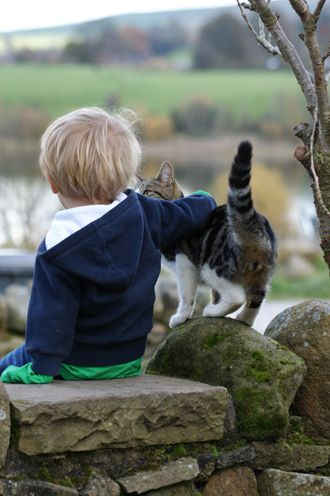 Cats and babies | international cat care