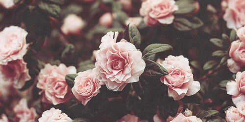 (27) Tumblr