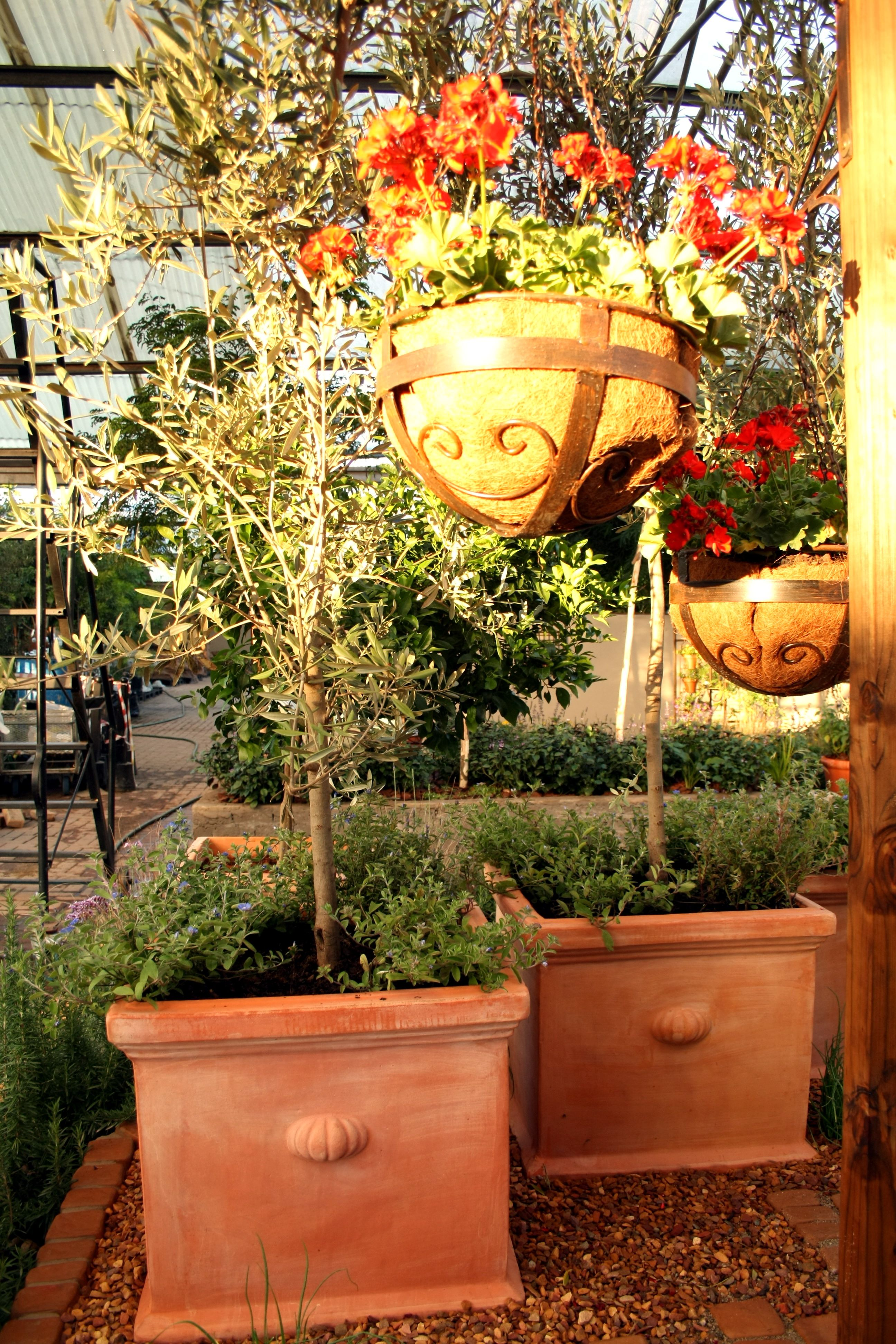 Water wise South African garden Mediterranean plants potager small ...