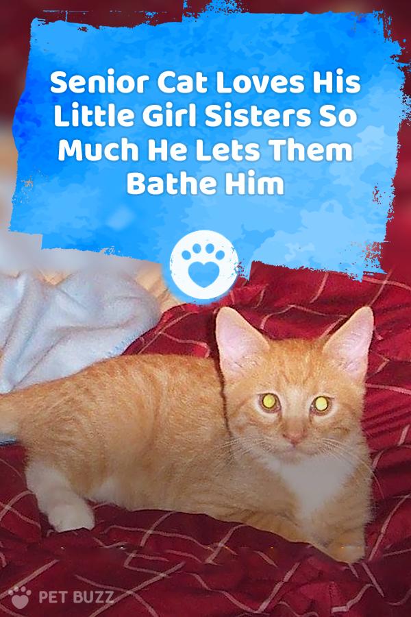 Senior Cat Loves His Little Girl Sisters So Much He Lets Them Bathe Him In 2020 Cat Love Senior Cat Girls Sister