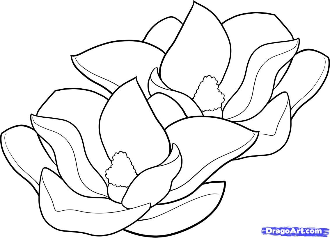 Magnolia Flowers Drawings How To Draw Magnolias Magnolias Step By Step Flowers Pop Flower Drawing Floral Drawing Flower Sketches